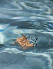 Pool Leaf, USA
