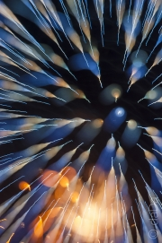 4th July Firework Abstract
