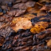 Autumn Leaves, USA