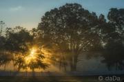 Easrly Morning Fog, USA