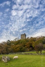 Dolwyddelan #2, North Wales