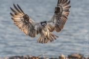 Osprey Landing, USA