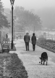 Richmond Dog Walk