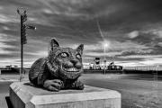 Alice's Cat, Llandudno