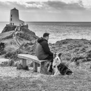 Llanddwyn_Sheepdog