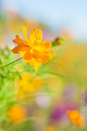 Wild Flowers, USA