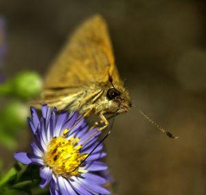 butterfly_web.jpg