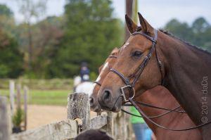 horse_show-40.jpg