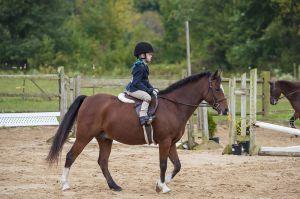 horse_show-41.jpg