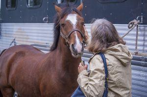 horse_show-59.jpg