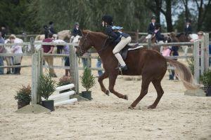 horse_show-113.jpg