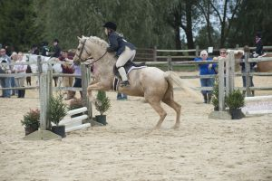 horse_show-114.jpg