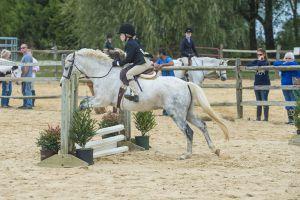 horse_show-116.jpg