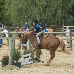 horse_show-129.jpg