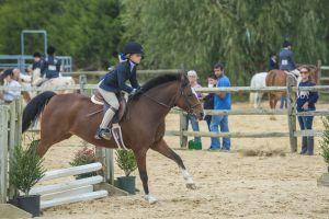 horse_show-132.jpg