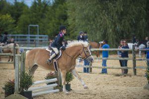 horse_show-140.jpg